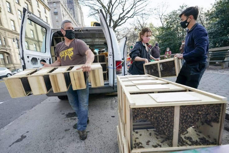 CATCH THE BUZZ- NYC Beehives on Rooftops