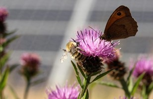 CATCH THE BUZZ – Pollinators and Solar Power Boom