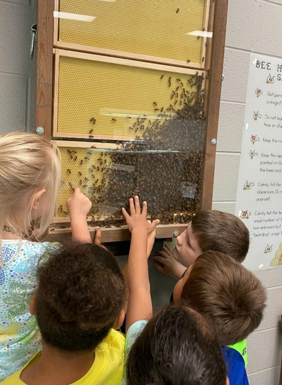 CATCH THE BUZZ- School Observation Hive