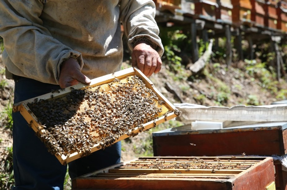 CATCH THE BUZZ- Honey Bee losses, it's not Just the US