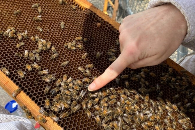 CATCH THE BUZZ- Scientists Follow the Bees