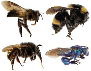 Mystery Deepens About Evolution of Bees' Social Behavior