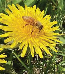 Minding Your Bees and Cues